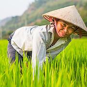 We Effect - Vietnam