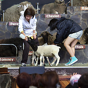 Visitors feed lambs during the sheep show at Agrodome, Rotorua. The Agrodome offers visitors the experience of seeing through the eyes of a New Zealand farmer. Situated just north of Rotorua city on a scenic 160 hectare sheep and beef farm, Agrodome gives visitors an educational and hands-on experience..  Agrodome includes a Sheep Show featuring 19 breeds of sheep, sheep shearing, cow milking, lamb feeding and dog demonstrations. .The Organic Farm Tour gives visitors a hands-on experience with a variety of farm animals. Rotorua, New Zealand,. 10th December 2010 Photo Tim Clayton..