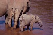 Elephant family, Samburu National Reserve, Kenya