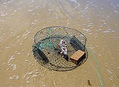 Northland-Crab fishing at Uretiti Beach