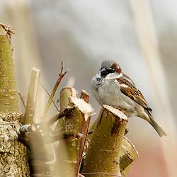garden birds, tuinvogels