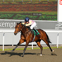 Kempton 13th June