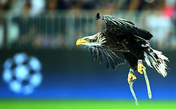 August 22, 2017 - Nice, France - The eagle mascotte of Nice club  during the UEFA Champions League Qualifying Play-Offs round, second leg match, between OGC Nice and SSC Napoli at Allianz Riviera Stadium on August 22, 2017 in Nice, France. (Credit Image: © Matteo Ciambelli/NurPhoto via ZUMA Press)