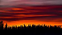 Spruce trees frame a -40C Yukon dawn