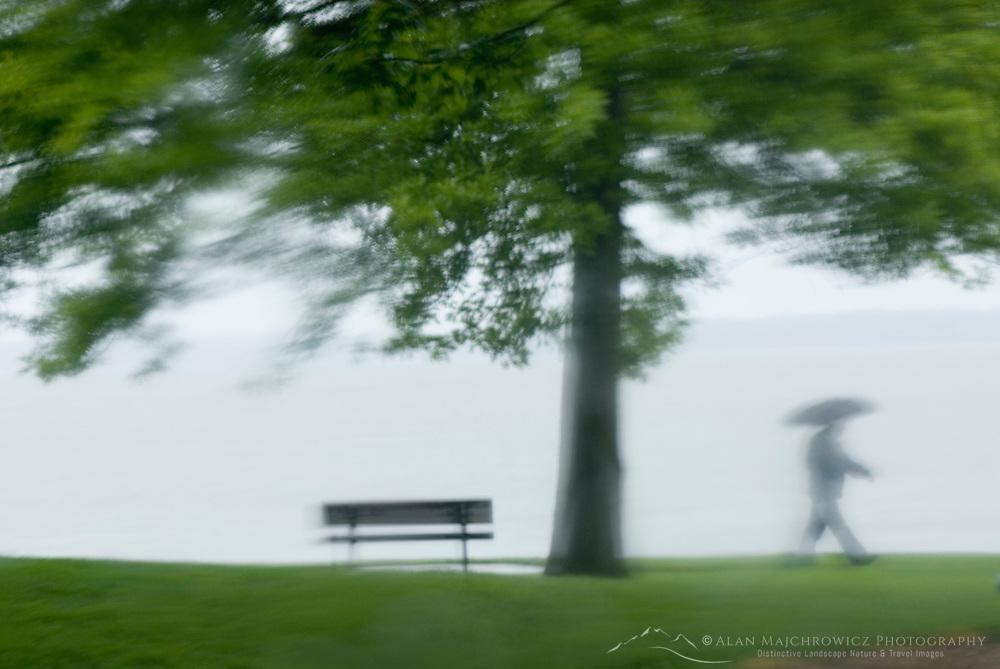 Single person with umbrella walking through waterfront park in the rain, Bellingham Washington