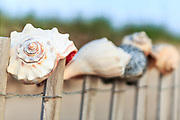Shells on a sand fence at Kitty Hawk beach Outer Banks. Useing a wide open apature I was able to make the other shells in the bacground out of focus.
