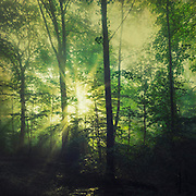 Forest sunrise after a rainy night