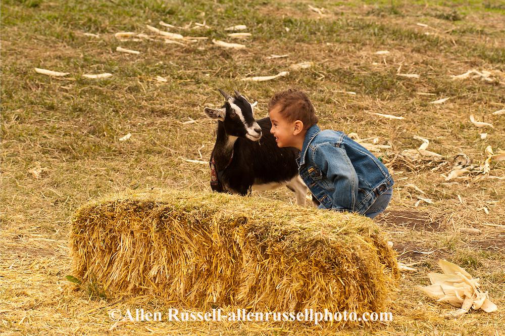 Boy, kids, plays with goat, farm