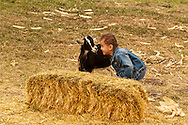 Boy, kids, plays with goat, farm