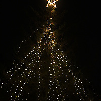 The Greenfield Christmas Tree is pictured lit at Greenfield Lake Park Thursday December 4, 2014 in Wilmington, N.C. (Jason A. Frizzelle)
