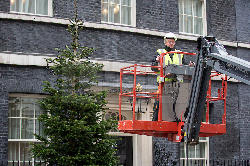 © Licensed to London News Pictures. 02/12/2016. London, UK. Christmas decorations including a wreath and a Christmas Tree are installed in Downing Street today. Photo credit : Tom Nicholson/LNP