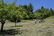 Using a powered agricultural mower, local man mows grass on a hillside meadow, on 18th June 2018, in Kupljenik, Slovenia