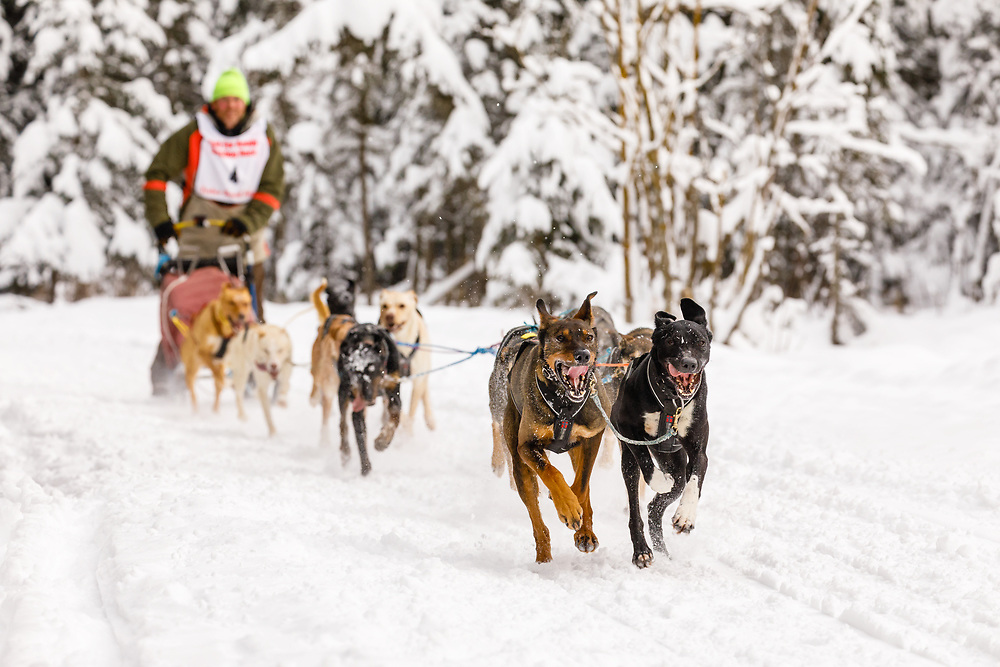 Musher Gary Markley competing in the Fur Rendezvous World Sled Dog Championships at Goose Lake Park in Anchorage in Southcentral Alaska. Winter. Afternoon.