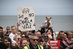 """© Licensed to London News Pictures . 07/06/2017. Colwyn Bay, UK. Placards reading """" Say no to Creuella de Ville """" in reference to Theresa May and """" Foxes for Corbyn """" are held up . Labour Party leader Jeremy Corbyn holds a campaign rally at Colwyn Bay on the final day of the General Election campaign ahead of polls opening tomorrow (8th July 2017) . Photo credit: Joel Goodman/LNP"""