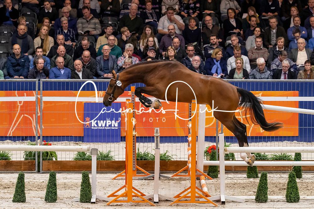 152, Legend VDP<br /> KWPN Hengstenkeuring - 's Hertogenbosch 2019<br /> © Hippo Foto - Dirk Caremans<br /> 31/01/2019
