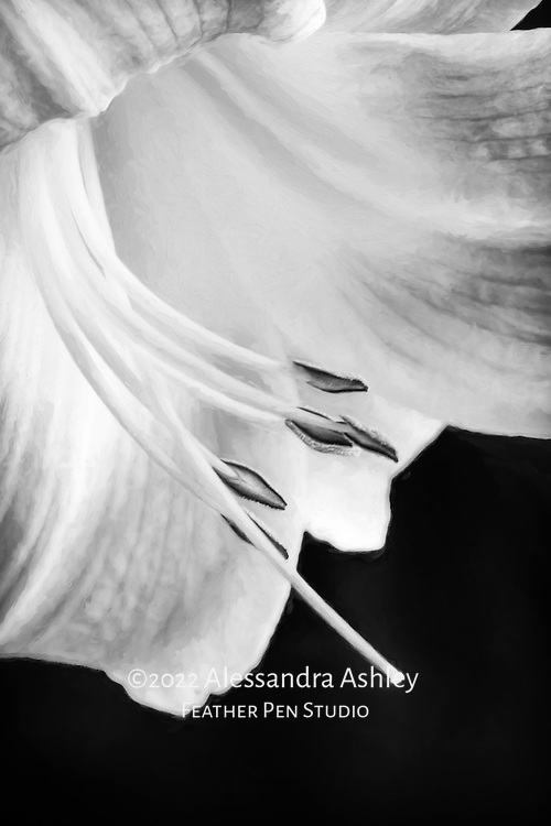 Macro view of petals and stamens of daylily.  Painted effects over original photograph.