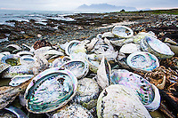 Poached abalone shells line the shoreline of Robben Island with Table Mountain in the distance, Robben Island, Western Cape, South Africa