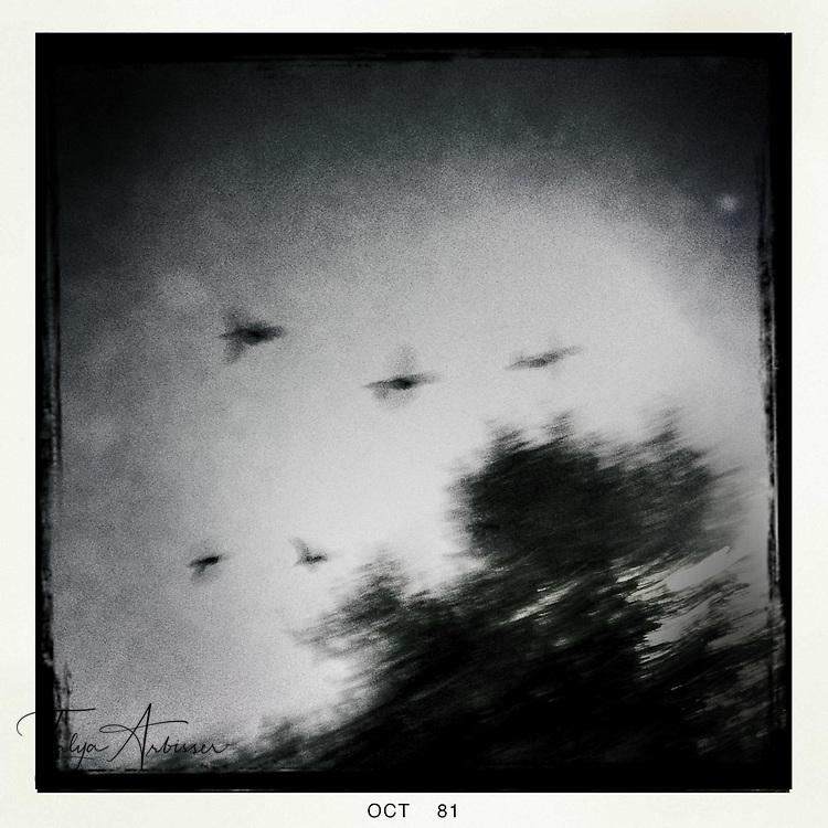 Birds in flight - Houston, Texas