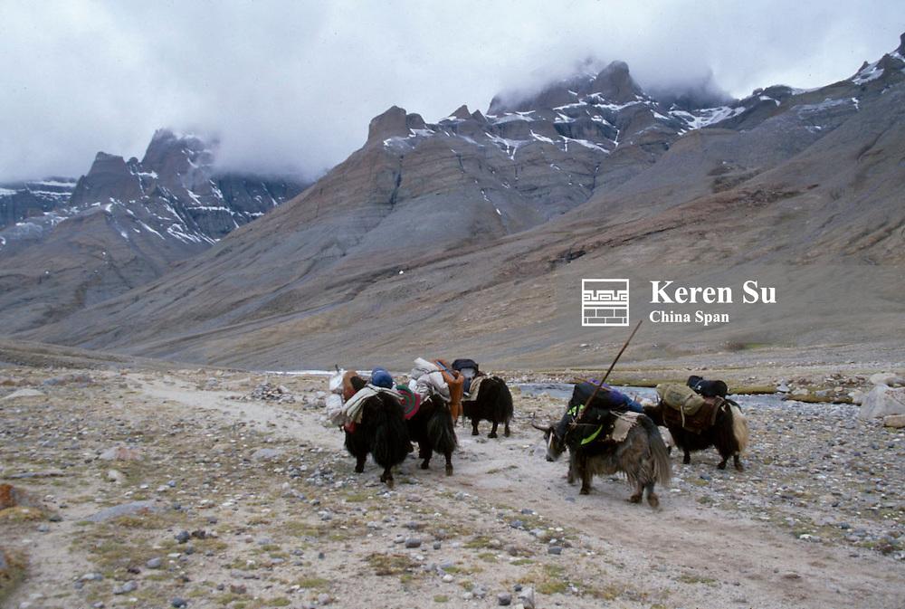 Yak caravan carrying goods in Mt. Kailas Valley, Ali area, Tibet, China