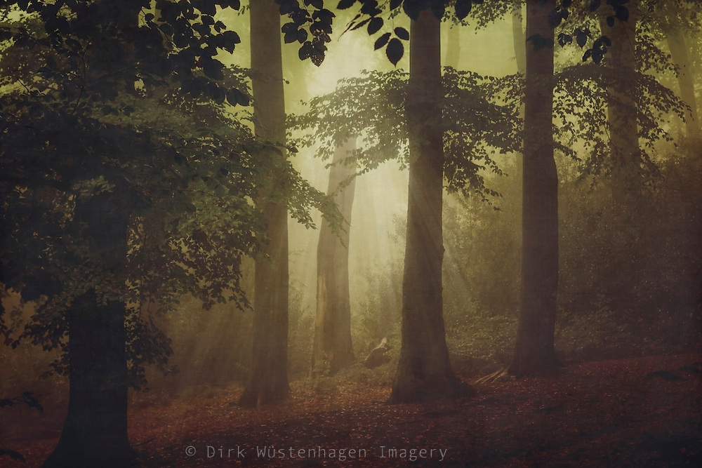 Light in a hazy forest - textured photograph<br />