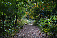 Woodland path on the Great Hill in Central Path