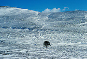 Sole pine tree in a snow covered field in the Cairngorms, Scotland, United Kingdom RESERVED USE - NOT FOR DOWNLOAD -  FOR USE CONTACT TIM GRAHAM
