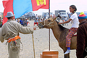 GOBI DESERT, MONGOLIA..08/26/2001.Bayangovi. Local Naadam festival. Giving mares' milk to horses and riders that will be taking part in a horse race over 30 kilometers..(Photo by Heimo Aga).
