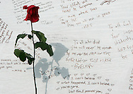 A single rose stands at a memorial to the victims of the Virginia Tech shootings in Blacksburg, Virginia April 18, 2007. REUTERS/Rick Wilking (UNITED STATES)
