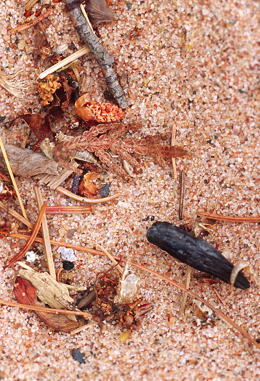 Miniature Flotsam on the Beach, Lake Superior