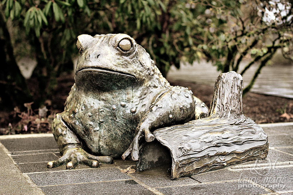 Bronze frog statue at Bellevue Botanical Gardens - closeup desat