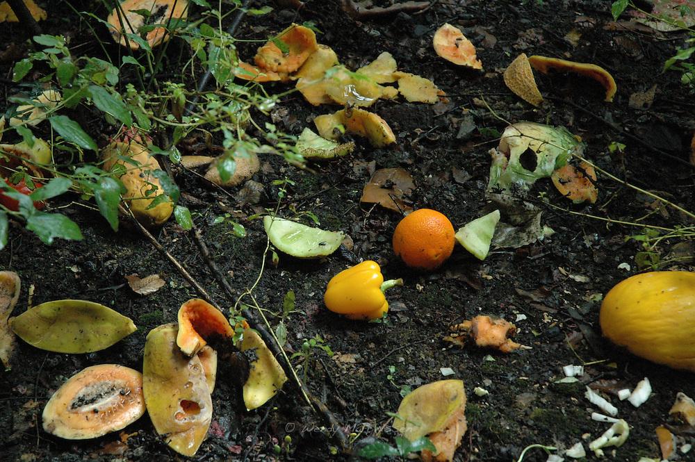 Scattered rests of fruit. Amsterdam, Netherlands, 2006