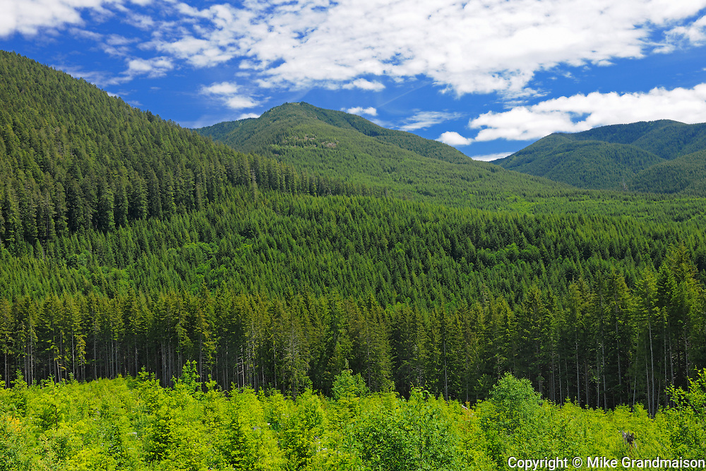Forest of the Coast Mountains on Vancouver Island<br /> <br /> Cowichan<br /> British Columbia<br /> Canada
