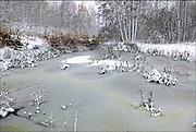 Nederland, Ubbergen, 22-1-2013Bomen in de sneeuw. Besneeuwde bomen in het bos. Een bevroren ven.Foto: Flip Franssen/Hollandse Hoogte