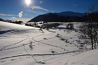 Wildlife tracks, by wild boar and red deer and red fox, Central Apennines, Italy