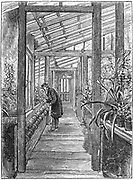 Charles Darwin (1809-1882), English naturalist. Evolution by Natural Selection. Darwin at work in his greenhouse at Down House, near Beckenham, Kent. Engraving