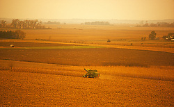 Tractor in corn field Agriculture