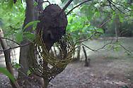 termite barbed-wire
