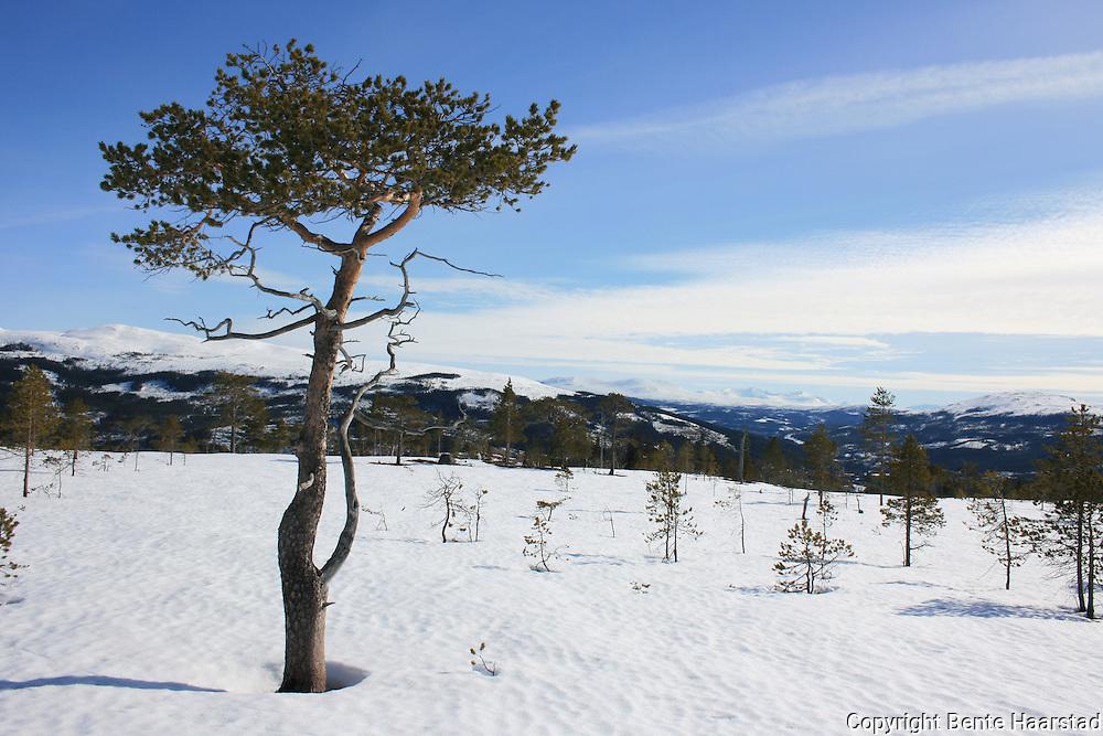 Flotte naturforhold for tur både sommer og vinter i Tydal.