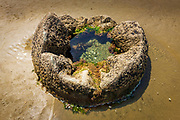 Tide pool in one of the Moeraki boulders, Moeraki, Otago, South Island, New Zealand