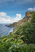 Lush tropical foliage on Pitcairn island.