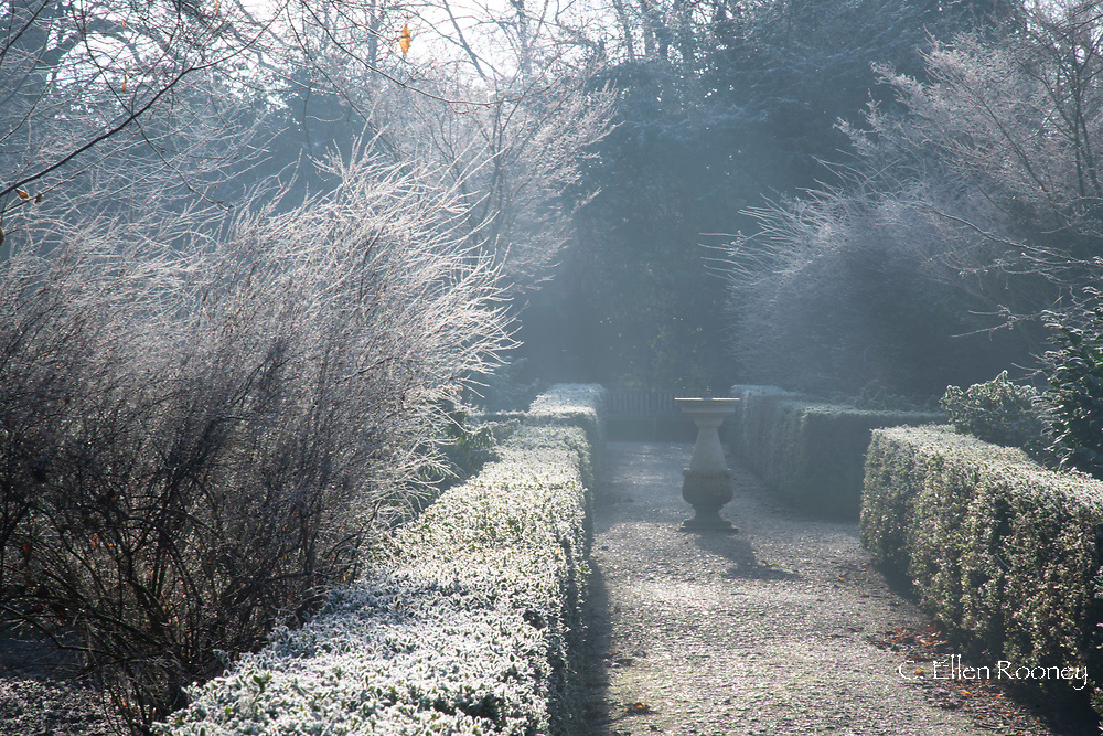 A stone urn and box hedge surrouned by frost coated branches in the garden at Chiswick House, Chiswick, London, UK
