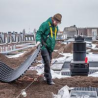 Nederland, Amsterdam, 21 december 2016.<br /> Op het dak van panden aan de Majubastraat in Amsterdam Oost wordt een groen dak voorziening aangebracht. <br /> <br /> &ldquo;Groene daken&rdquo; is een verzamelnaam voor platte- en hellende daken met begroeiing. Die begroeiing kan bestaan uit vetplantjes (sedum), kruiden, mos en/of gras. Maar ook struiken en bomen zijn te gebruiken.<br /> <br /> Foto: Jean-Pierre Jans
