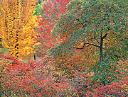 Autumn Portrait, Washington Park Arboretum, Seattle, Washington