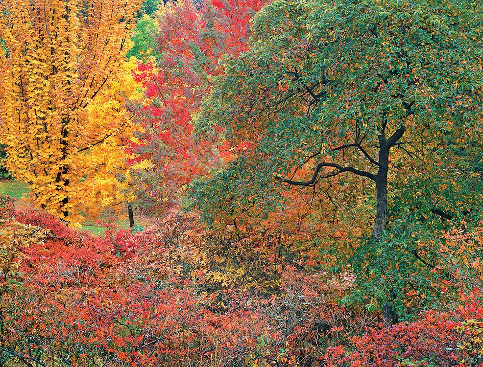 Autumn Portrait, Washington Park Arboretum, Seattle, Washington