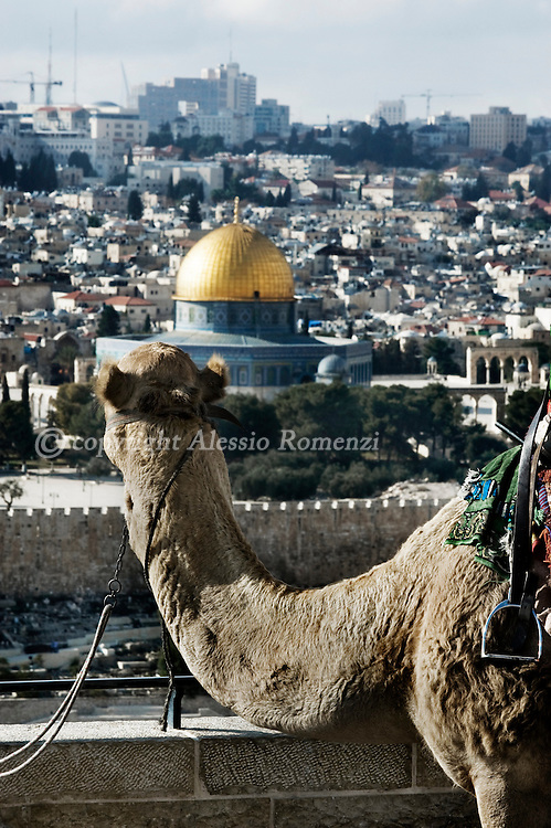 .JERUSALEM : This general view shows a camel resting at the terrace       of the Mount of Olives Cemetery and the Dome of the Rock (C) in the old city of Jerusalem on December 8, 2009. European Union foreign ministers agreed that Jerusalem should be the capital of both Israel and a future Palestinian state, as part of a negotiated settlement, EU diplomats said..© ALESSIO ROMENZI