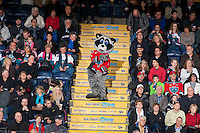 KELOWNA, CANADA - FEBRUARY 9: Rocky Racoon the mascot of the Kelowna Rockets dances in the stands on February 9, 2015 at Prospera Place in Kelowna, British Columbia, Canada.  (Photo by Marissa Baecker/Shoot the Breeze)  *** Local Caption *** Rocky Racoon