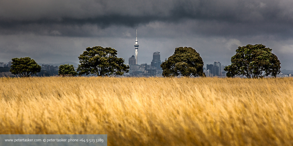 Unusual view of downtown Auckland, from Browns Island, Hauraki Gulf, Auckland, New Zealand.