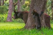 Florida Fauna