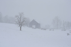 Horses in the snow on Rose Hill Farm, Monday, Feb. 16, 2015 on Rice Road in Lexington.