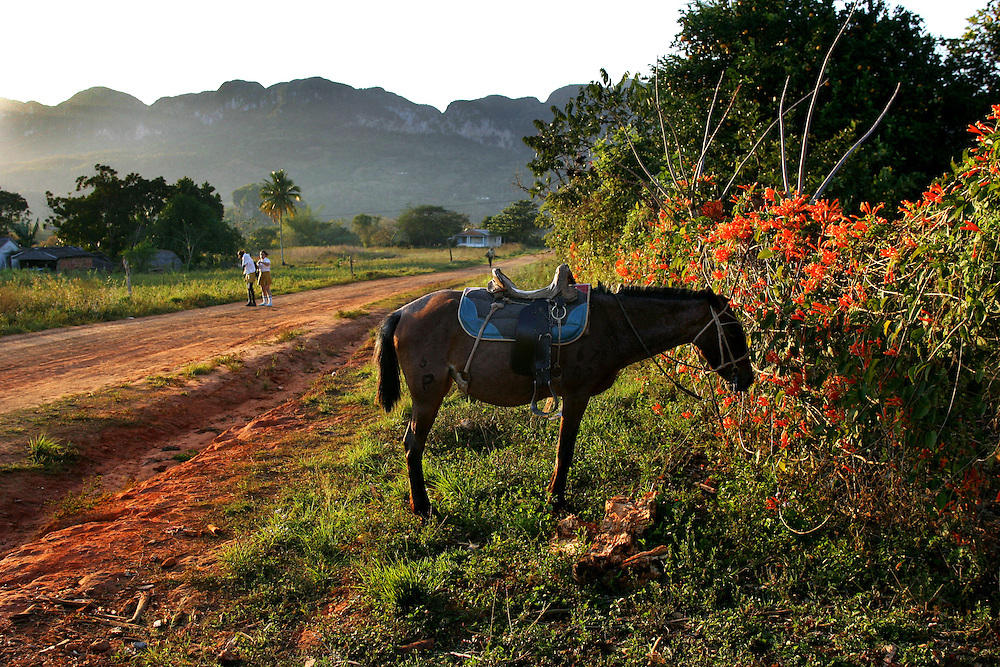 Two girls come home from school as a horse waits by the side of the road in rural Cuba.